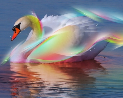 Rainbow-Swan-fantasy-19521363-1280-1024